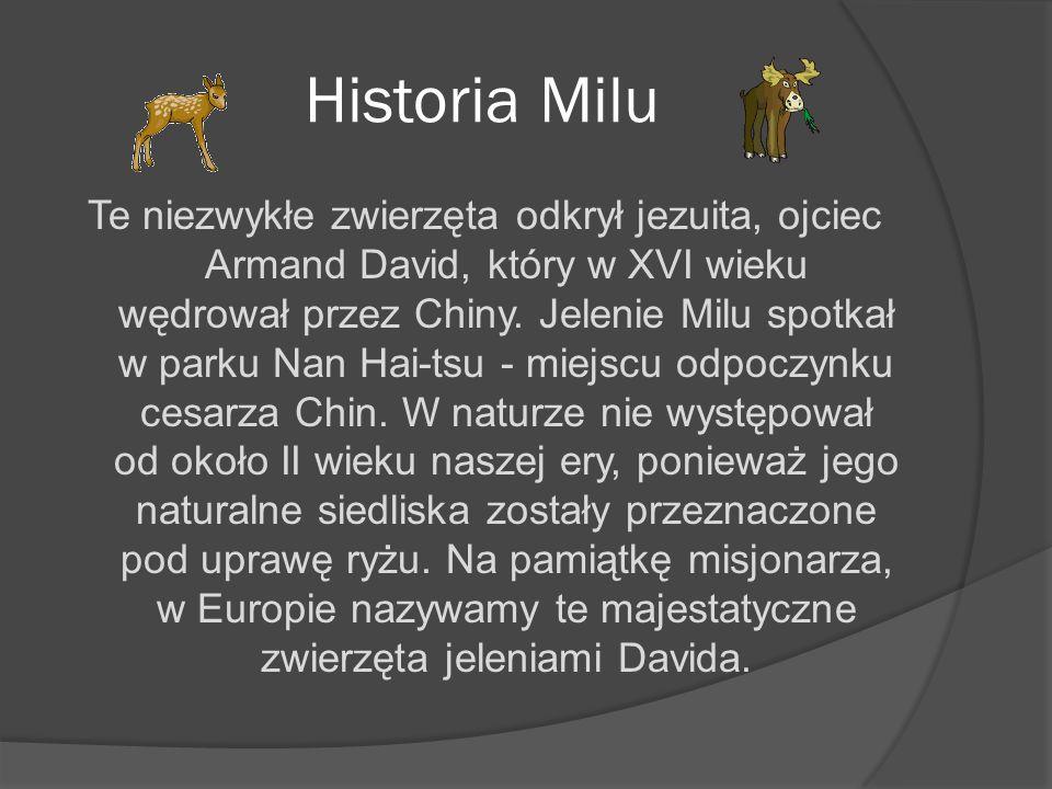 Historia Milu Te niezwykłe zwierzęta odkrył jezuita, ojciec Armand David, który w XVI wieku wędrował przez Chiny. Jelenie Milu spotkał w parku Nan Hai