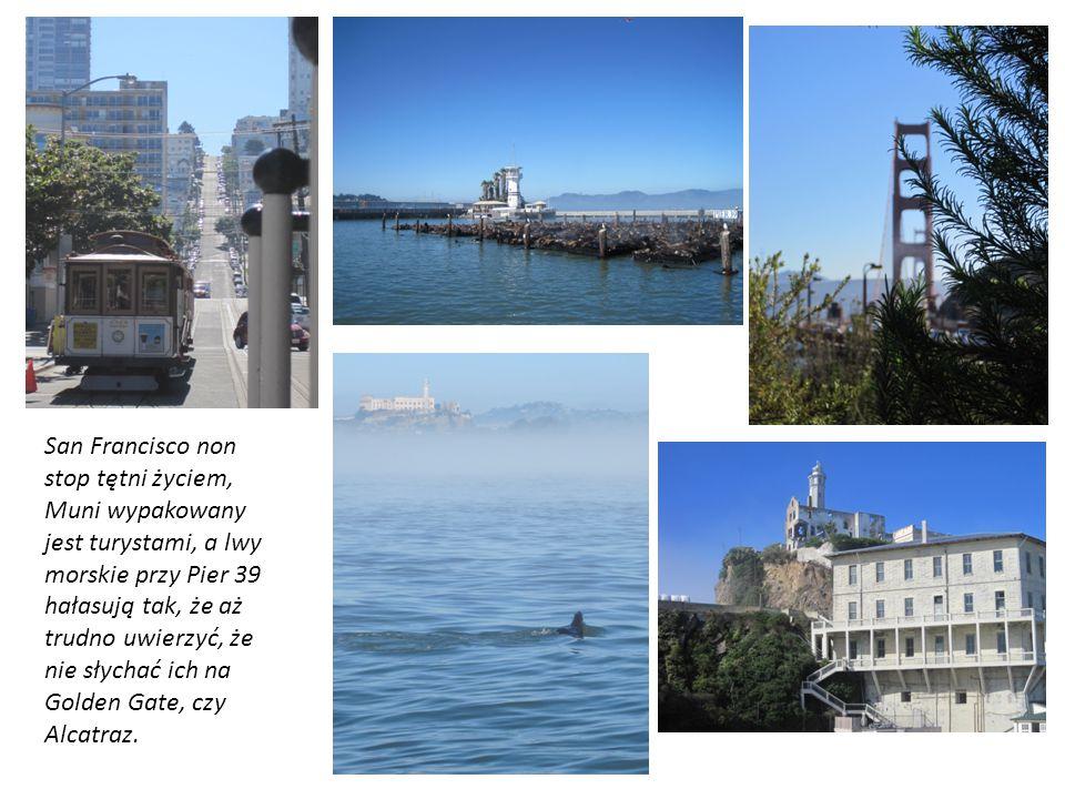 San Francisco non stop tętni życiem, Muni wypakowany jest turystami, a lwy morskie przy Pier 39 hałasują tak, że aż trudno uwierzyć, że nie słychać ic