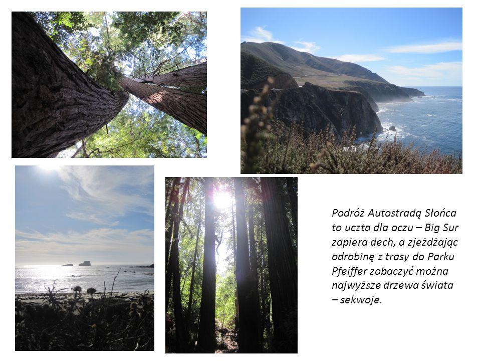 Podróż Autostradą Słońca to uczta dla oczu – Big Sur zapiera dech, a zjeżdżając odrobinę z trasy do Parku Pfeiffer zobaczyć można najwyższe drzewa świ