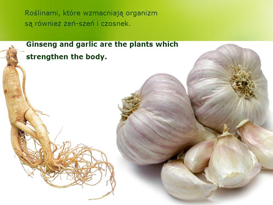 Roślinami, które wzmacniają organizm są również żeń-szeń i czosnek. Ginseng and garlic are the plants which strengthen the body.