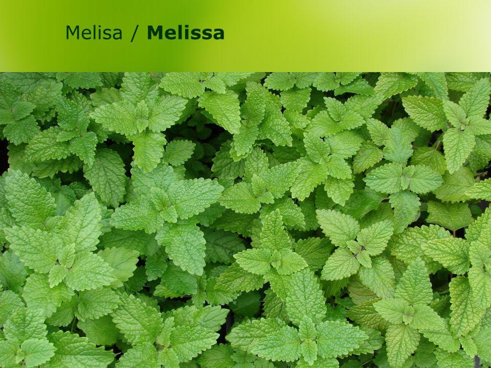 Melisa / Melissa