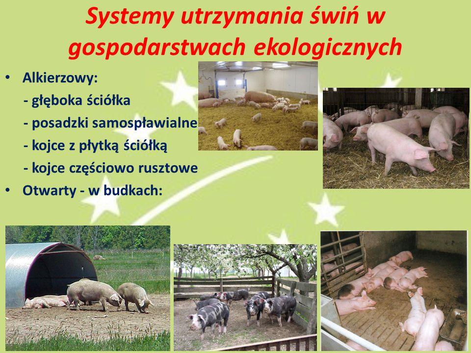 Systemy utrzymania świń w gospodarstwach ekologicznych Alkierzowy: - głęboka ściółka - posadzki samospławialne - kojce z płytką ściółką - kojce częściowo rusztowe Otwarty - w budkach: 14