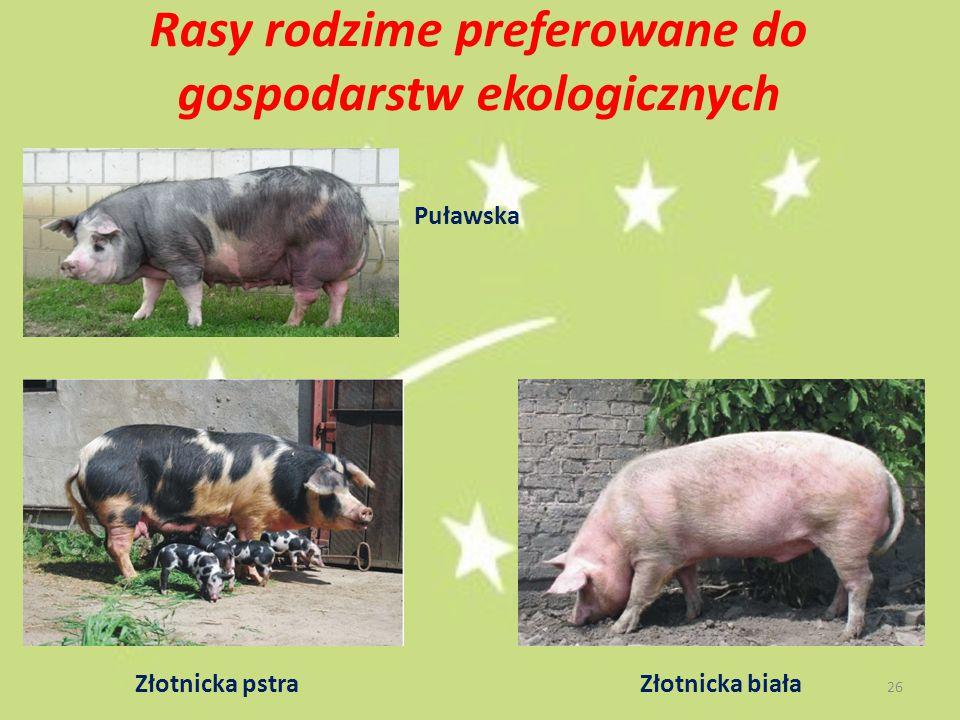 Rasy rodzime preferowane do gospodarstw ekologicznych Puławska Złotnicka pstraZłotnicka biała 26