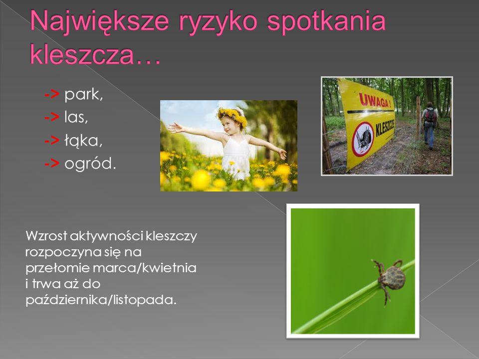 -> park, -> las, -> łąka, -> ogród.