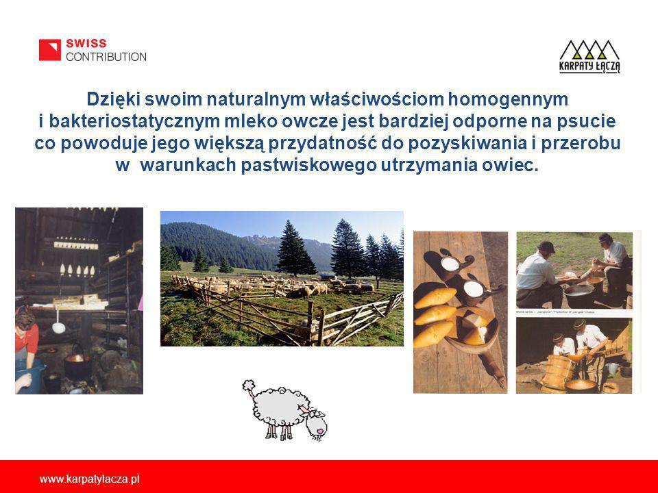 www.karpatylacza.pl Dzięki swoim naturalnym właściwościom homogennym i bakteriostatycznym mleko owcze jest bardziej odporne na psucie co powoduje jego większą przydatność do pozyskiwania i przerobu w warunkach pastwiskowego utrzymania owiec.