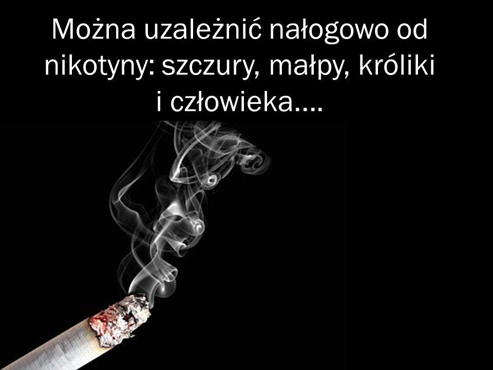 Można uzależnić nałogowo od nikotyny: szczury, małpy, króliki i człowieka....