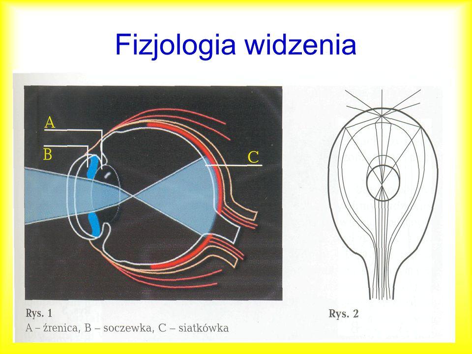 Fizjologia widzenia