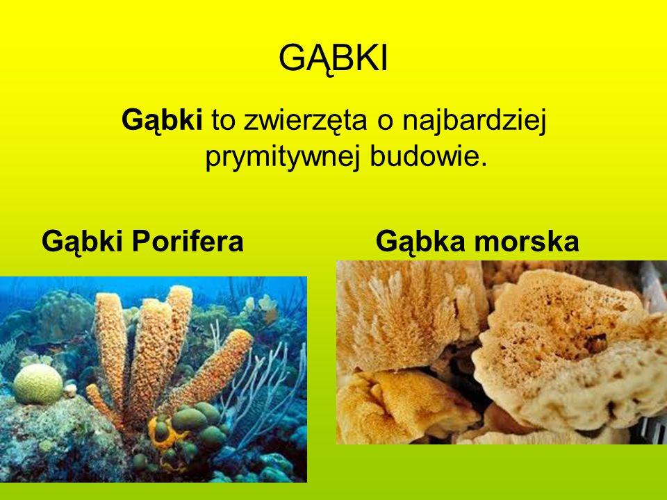 GĄBKI Gąbki to zwierzęta o najbardziej prymitywnej budowie. Gąbki Porifera Gąbka morska