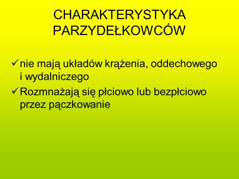 PŁAZIŃCE Płazińce (robaki płaskie) to grupa organizmów, u których występuje trzecia warstwa tkanek – mezoderma.