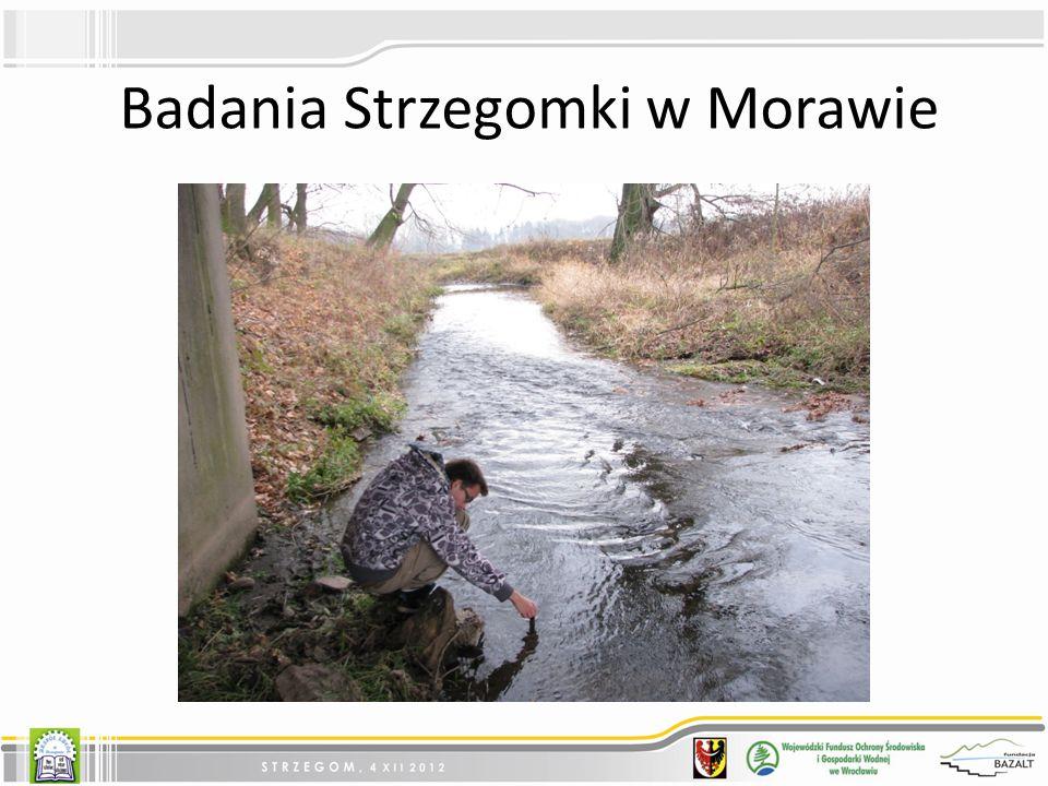 Badania Strzegomki w Morawie