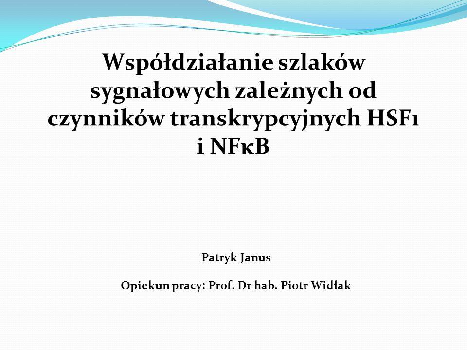 Przebieg pracy: I.Identyfikacja genów zależnych od NFκB, których ekspresja ulega zmianie w obecności aktywnej formy HSF1: 1.Całogenomowe profilowanie ekspresyjne w komórkach U2-OS w warunkach hipertermii i/lub stymulacji cytokiną TNFα: a)przeprowadzenie eksperymentu – stymulacja komórek HS i/lub TNFα, b)analiza mikromacierzowa – Human Genome U133 Plus 2.0 Array (Affymetrix), c)normalizacja i analiza otrzymanych danych mikromacierzowych.