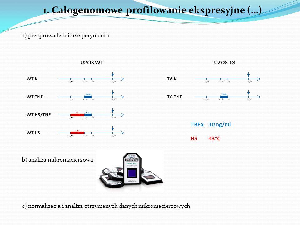 1. Całogenomowe profilowanie ekspresyjne (…) a) przeprowadzenie eksperymentu U2OS WTU2OS TG -1,5h -0,5h 0h 1,5h TNFα HS -1,5h -0,5h 0h 1,5h TNFα WT K