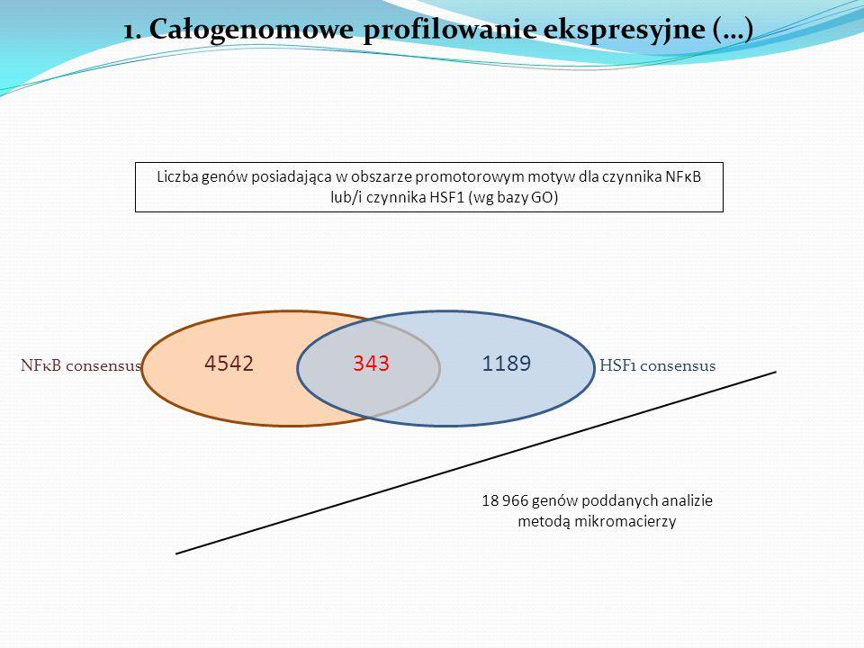 1. Całogenomowe profilowanie ekspresyjne (…) 45421189343 NFκB consensusHSF1 consensus Liczba genów posiadająca w obszarze promotorowym motyw dla czynn