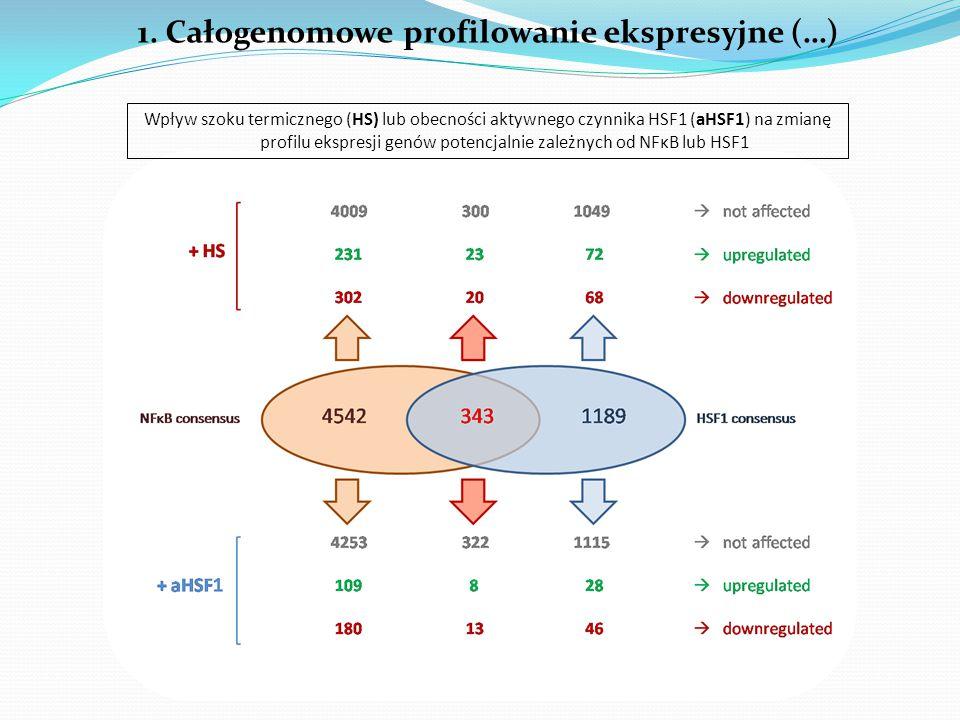 1. Całogenomowe profilowanie ekspresyjne (…) Wpływ szoku termicznego (HS) lub obecności aktywnego czynnika HSF1 (aHSF1) na zmianę profilu ekspresji ge