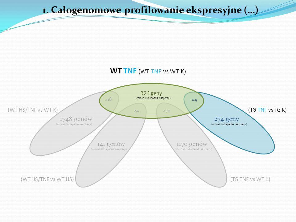 2. Analiza funkcjonalna 324 geny WT TNF (WT TNF vs WT K) (wzrost lub spadek ekspresji)