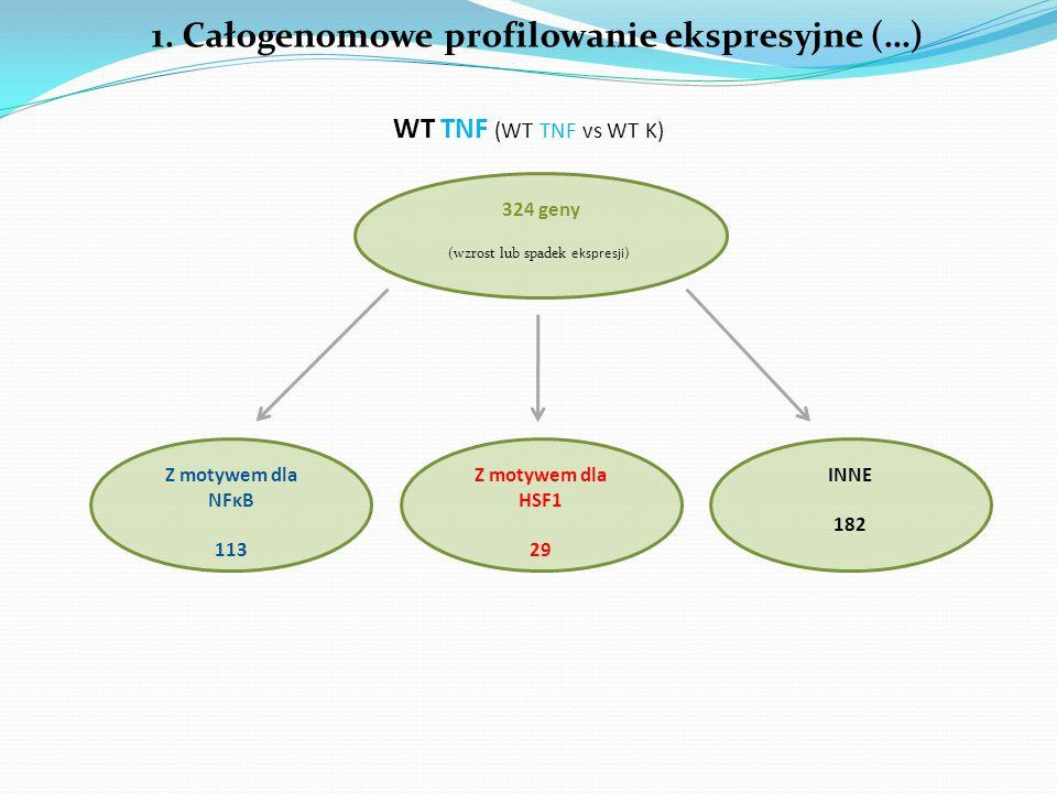 1. Całogenomowe profilowanie ekspresyjne (…) 324 geny WT TNF (WT TNF vs WT K) (wzrost lub spadek ekspresji) Z motywem dla NFκB 113 Z motywem dla HSF1