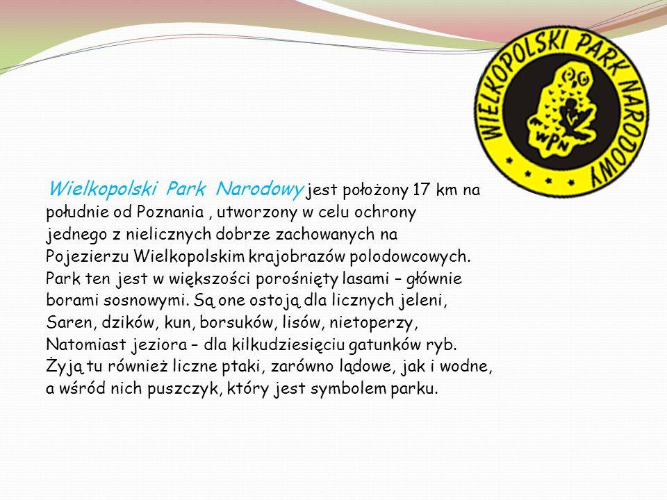 Wielkopolski Park Narodowy jest położony 17 km na południe od Poznania, utworzony w celu ochrony jednego z nielicznych dobrze zachowanych na Pojezierz
