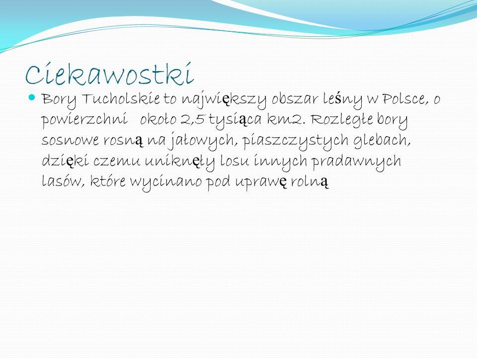 Ciekawostki Bory Tucholskie to najwi ę kszy obszar le ś ny w Polsce, o powierzchni około 2,5 tysi ą ca km2. Rozległe bory sosnowe rosn ą na jałowych,