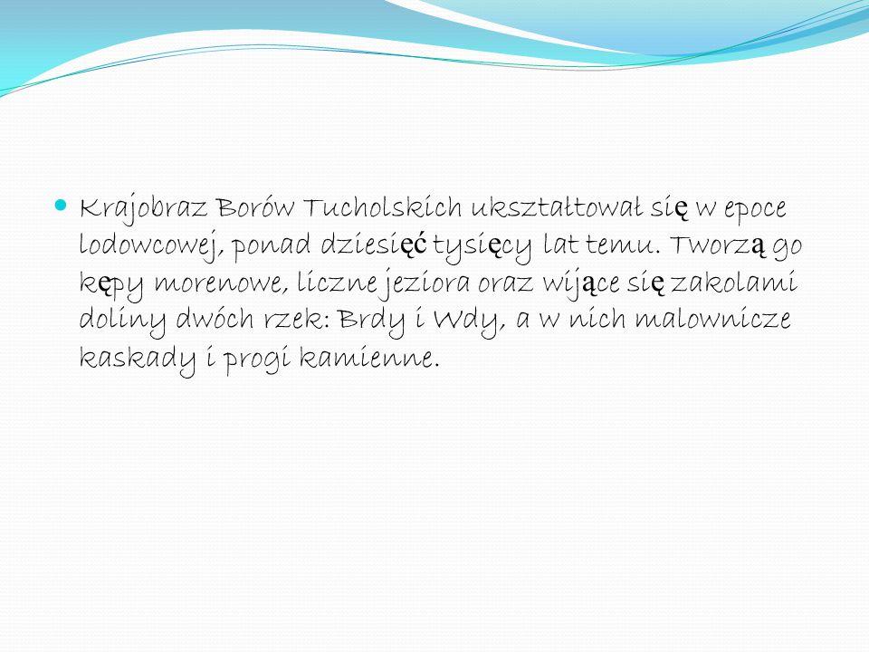 Krajobraz Borów Tucholskich ukształtował si ę w epoce lodowcowej, ponad dziesi ęć tysi ę cy lat temu. Tworz ą go k ę py morenowe, liczne jeziora oraz