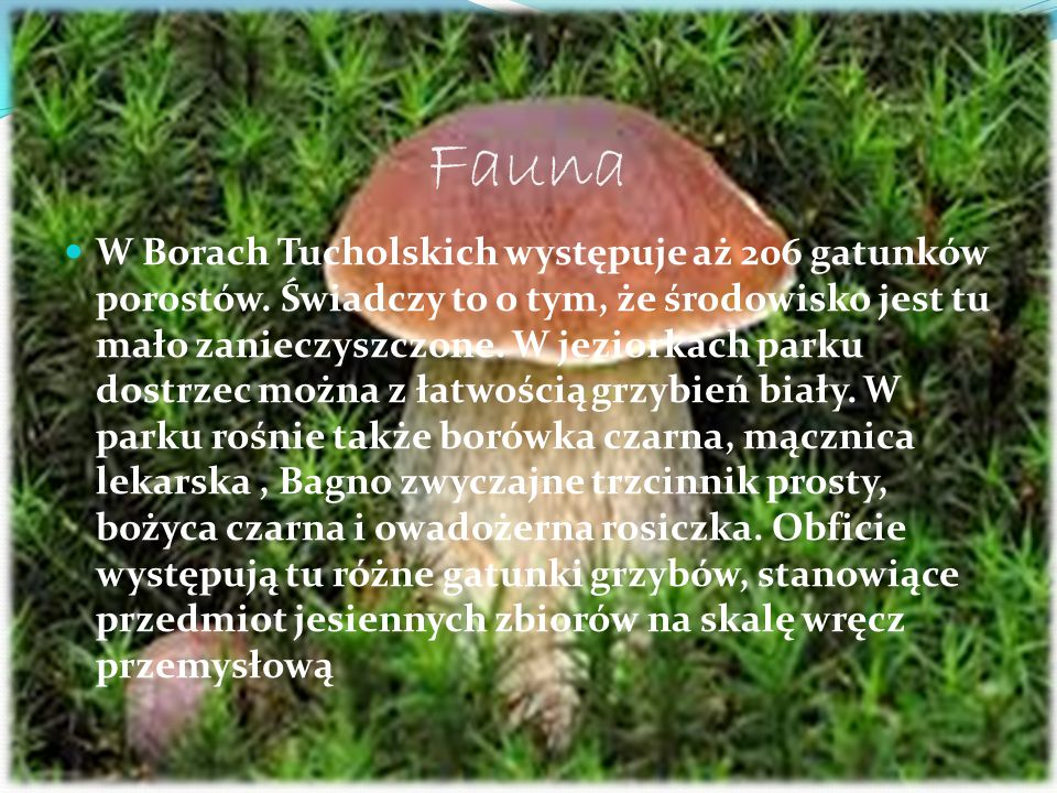 Fauna W Borach Tucholskich występuje aż 206 gatunków porostów. Świadczy to o tym, że środowisko jest tu mało zanieczyszczone. W jeziorkach parku dostr