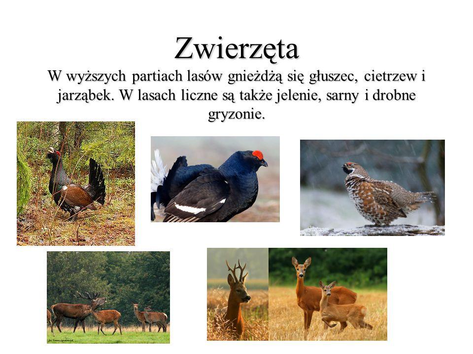 Zwierzęta W wyższych partiach lasów gnieżdżą się głuszec, cietrzew i jarząbek. W lasach liczne są także jelenie, sarny i drobne gryzonie.