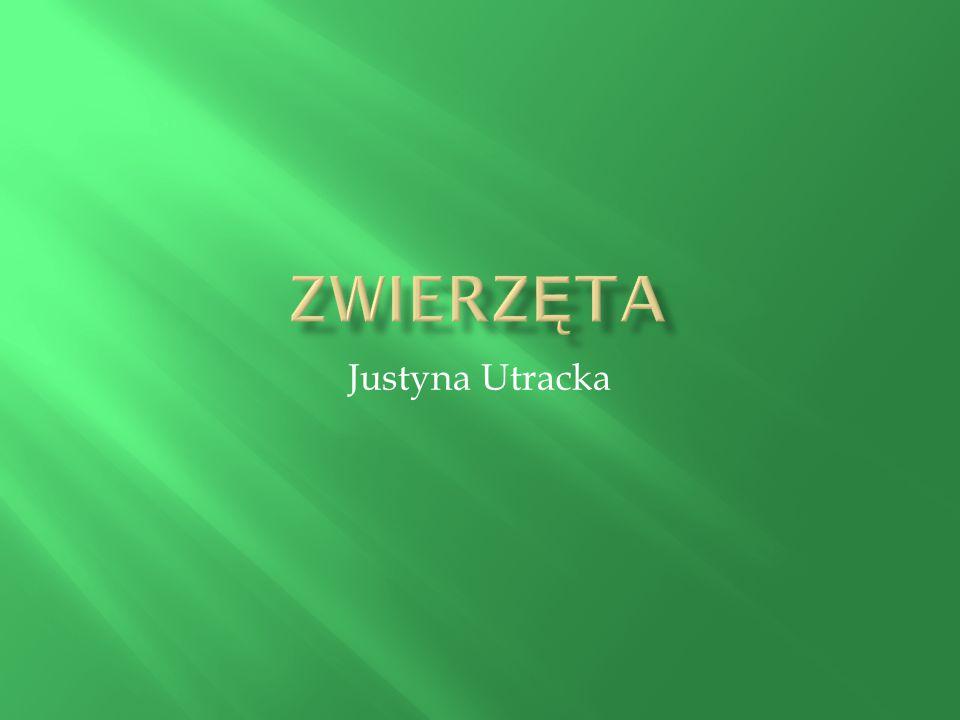 Justyna Utracka