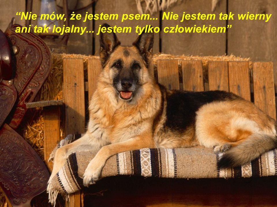 """""""Możemy sądzić serce człowieka według tego jak traktuje on zwierzęta"""" (Immanuel Kant)"""