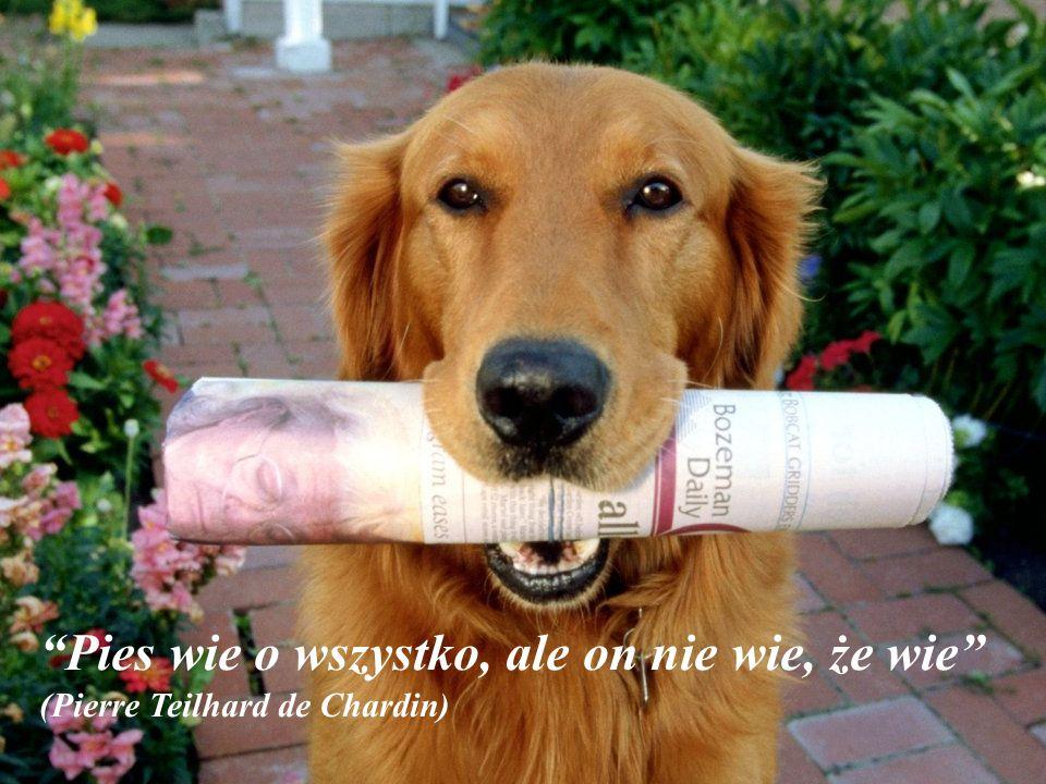 """""""Nie myśl, że podziw twojego psa jest jasnym dowodem na to, że jesteś cudowny""""(Ann Landers)"""