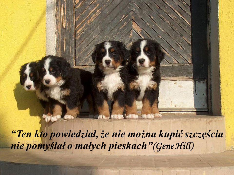 """""""Pies wie o wszystko, ale on nie wie, że wie"""" (Pierre Teilhard de Chardin)"""