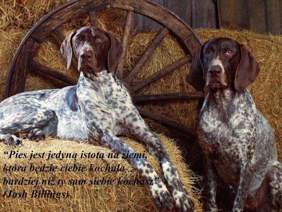 """""""Jeżeli twój pies kogoś nie lubi prawdopodobnie ty również nie powinieneś go lubić."""""""