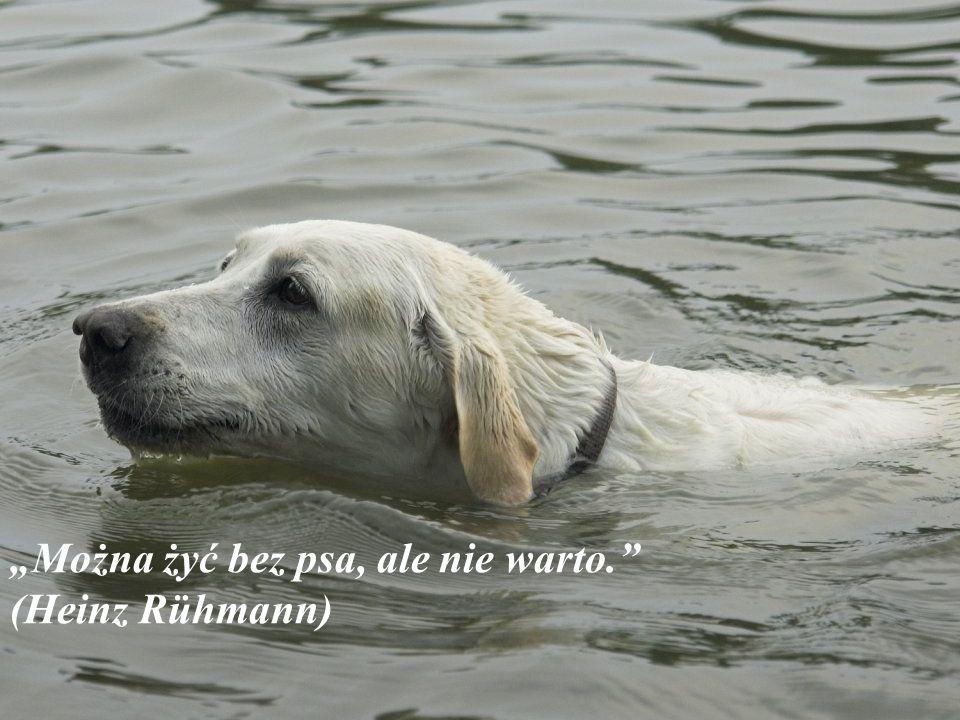 """""""Pies jest jedyną istotą na ziemi, która będzie ciebie kochała bardziej niż ty sam siebie kochasz"""" (Josh Billings)"""