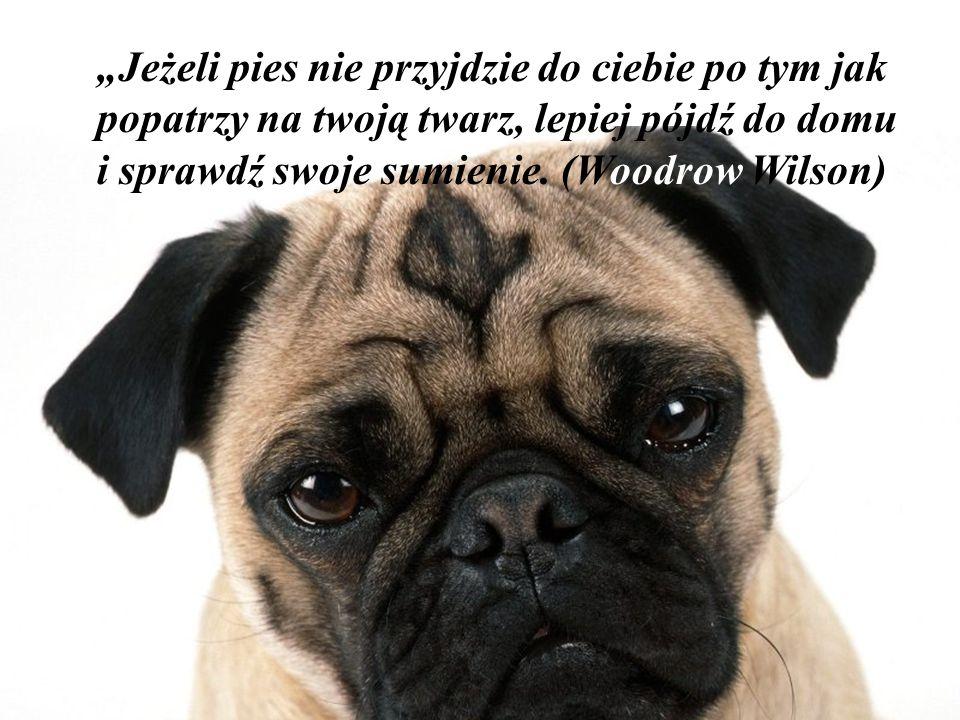"""""""Można żyć bez psa, ale nie warto."""" (Heinz Rühmann)"""