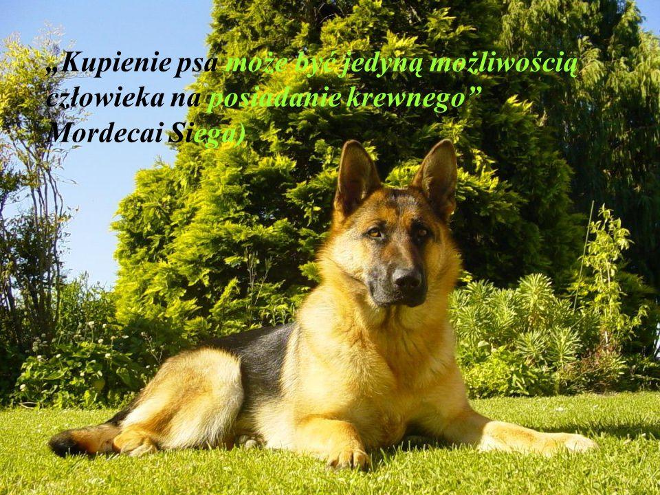 """""""Jeżeli pies nie przyjdzie do ciebie po tym jak popatrzy na twoją twarz, lepiej pójdź do domu i sprawdź swoje sumienie. (Woodrow Wilson)"""