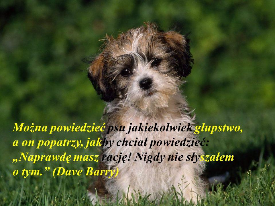 """""""Kupienie psa może być jedyną możliwością człowieka na posiadanie krewnego"""" Mordecai Siega)"""