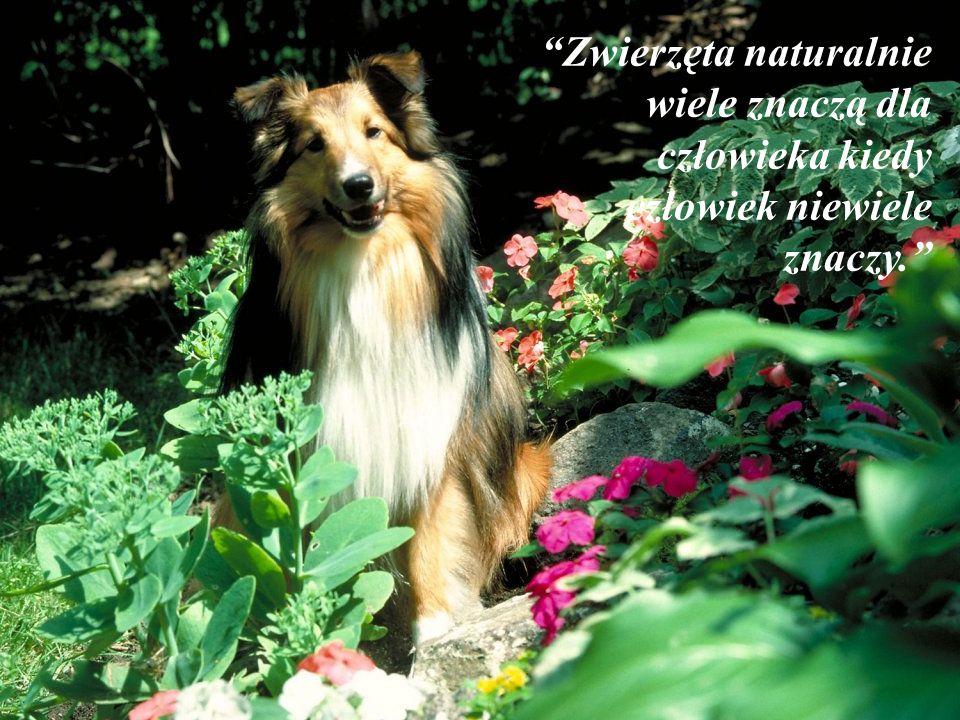 """""""Gdy idziesz poćwiczyć idź razem z kimś kto pójdzie z tobą chętnie i dobrowolnie, najlepiem z psem."""" (David Brown)"""