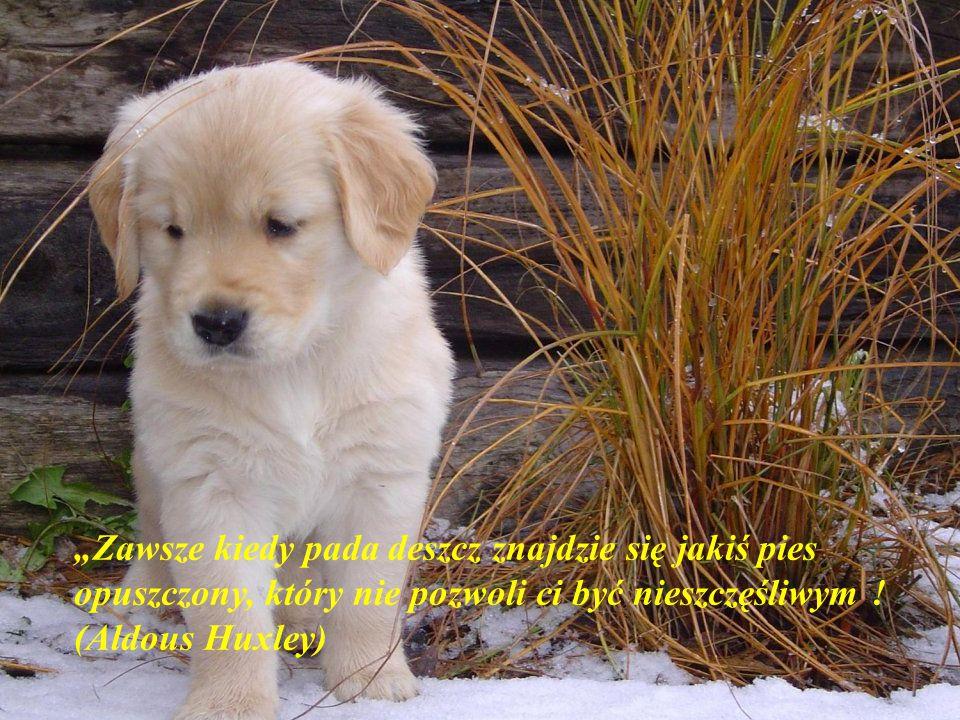 """""""Nie ma lepszego psychiatry na świecie od psa"""" (Woodrow Wilson)"""