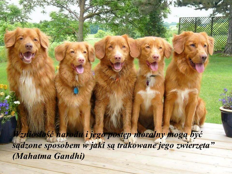 """""""Zawsze kiedy pada deszcz znajdzie się jakiś pies opuszczony, który nie pozwoli ci być nieszczęśliwym ! (Aldous Huxley)"""