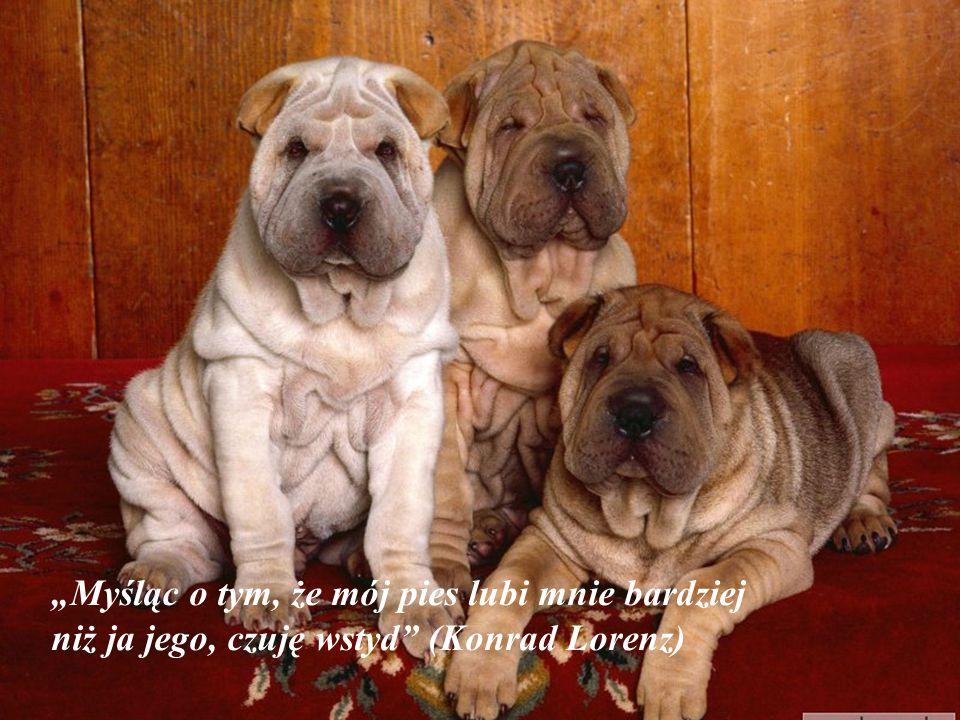 """""""Psy nie są wszystkim w naszym życiu, ale czynią je kompletne"""" (Roger Caras)"""