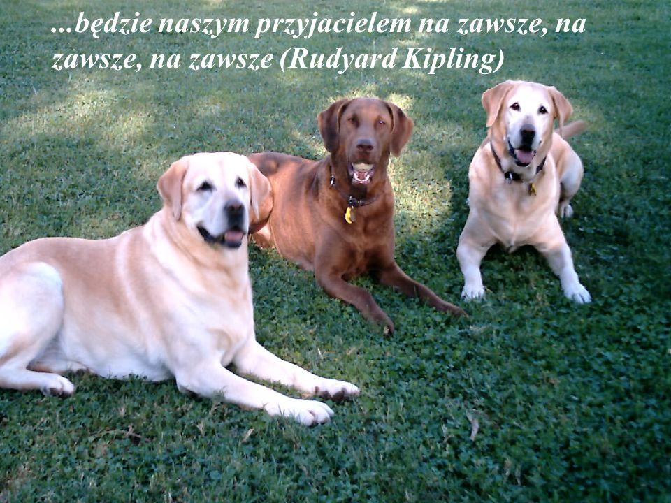 """""""Myśląc o tym, że mój pies lubi mnie bardziej niż ja jego, czuję wstyd"""" (Konrad Lorenz)"""