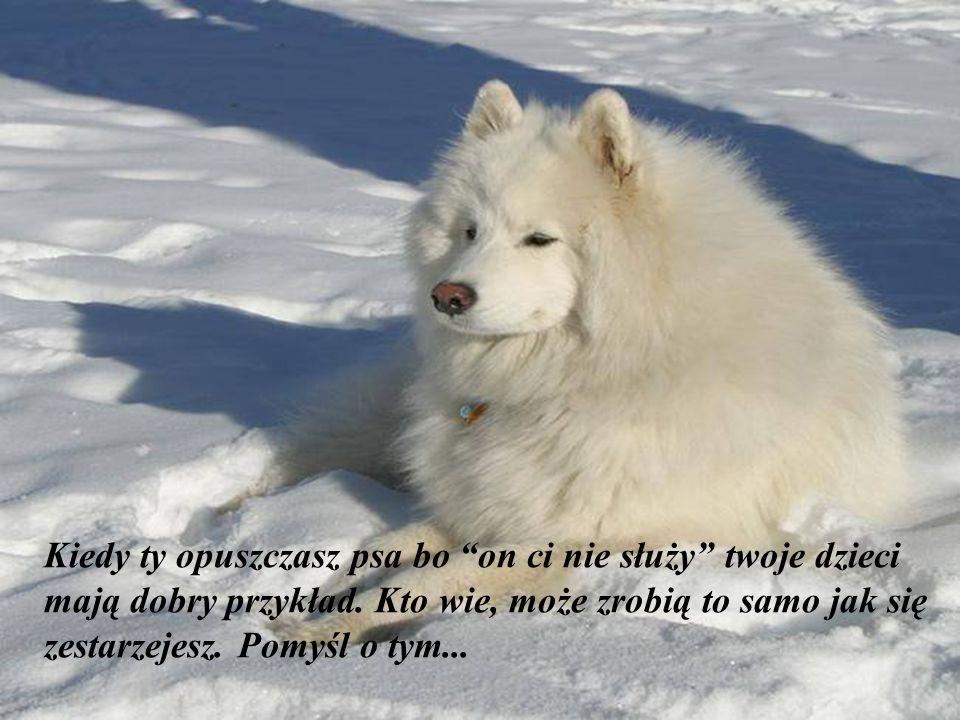"""""""Miłość dla zwierząt podnosi poziom kultury narodu"""" (F. Salvochea)"""