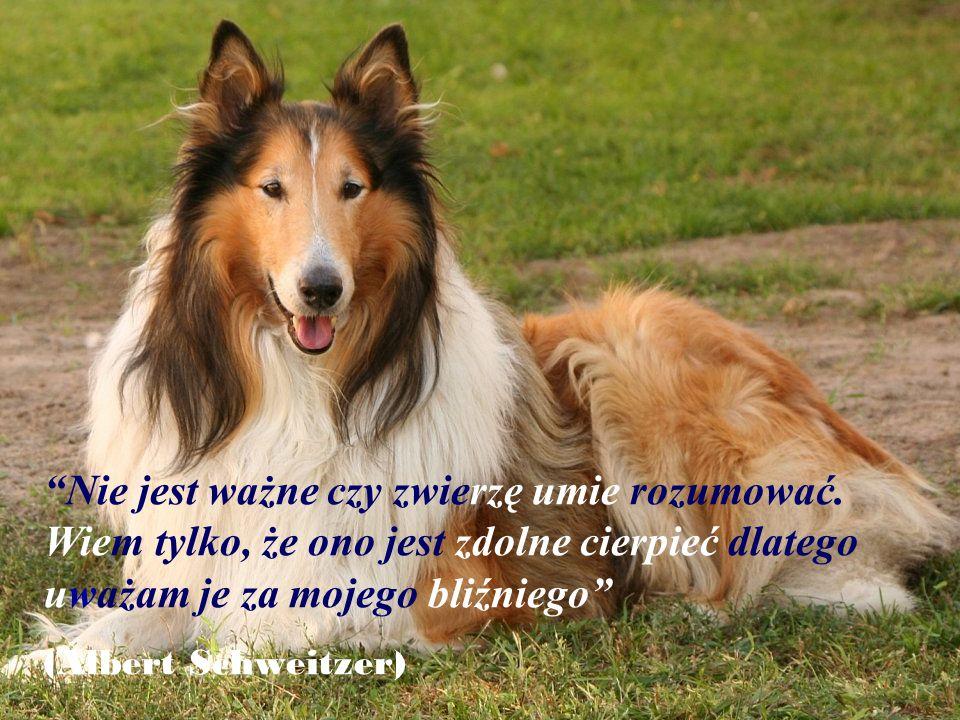 """""""Miłość jest wtedy jak twój pies liże twoją twarz, nawet wtedy jak zostawiasz go samego na cały dzień"""" (Anita, czteroletnia)"""