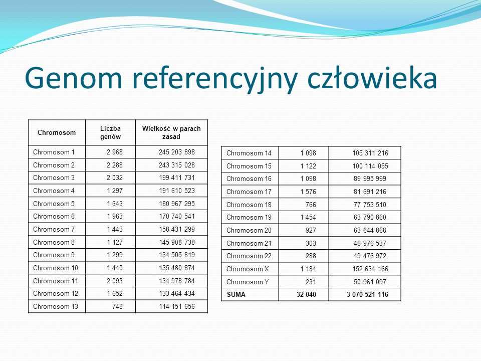 Genom referencyjny człowieka Chromosom Liczba genów Wielkość w parach zasad Chromosom 1 2 968 245 203 898 Chromosom 2 2 288 243 315 028 Chromosom 3 2