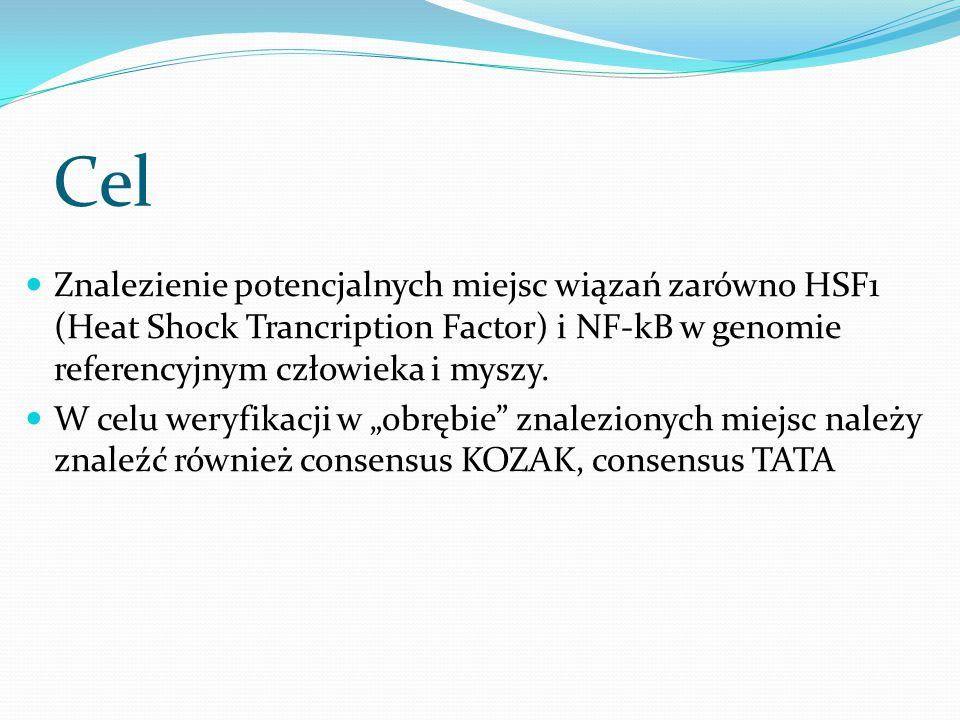 Cel Znalezienie potencjalnych miejsc wiązań zarówno HSF1 (Heat Shock Trancription Factor) i NF-kB w genomie referencyjnym człowieka i myszy. W celu we