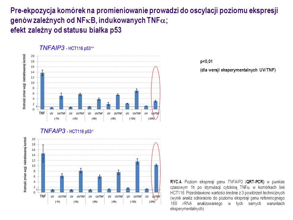 Pre-ekpozycja komórek na promieniowanie prowadzi do oscylacji poziomu ekspresji genów zależnych od NF  B, indukowanych TNF  ; efekt  zależny od sta