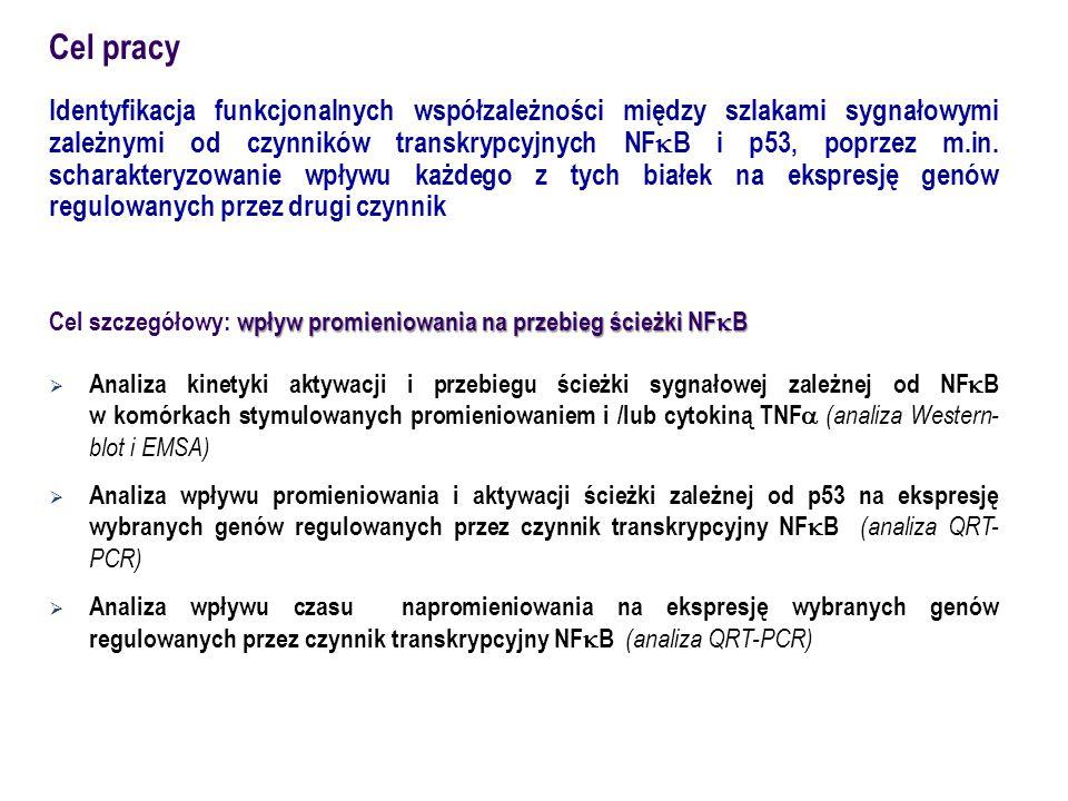 HCT116 ( human colon carcinoma )  p53 +/+ (wt)  p53 -/- ( knock-out ) Model doświadczalny RYC.1.