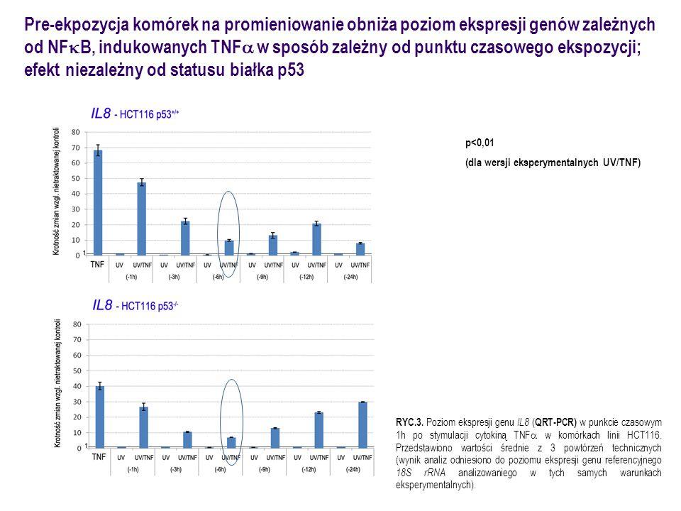 Pre-ekpozycja komórek na promieniowanie obniża poziom ekspresji genów zależnych od NF  B, indukowanych TNF  w sposób zależny od punktu czasowego ekspozycji; efekt  niezależny od statusu białka p53 p<0,01 (dla wersji eksperymentalnych UV/TNF) RYC.4.