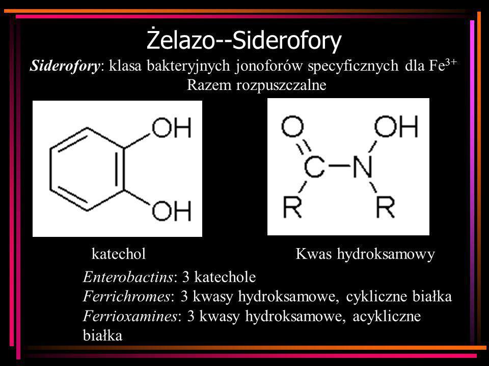 Żelazo--Siderofory Siderofory: klasa bakteryjnych jonoforów specyficznych dla Fe 3+ Razem rozpuszczalne Enterobactins: 3 katechole Ferrichromes: 3 kwa