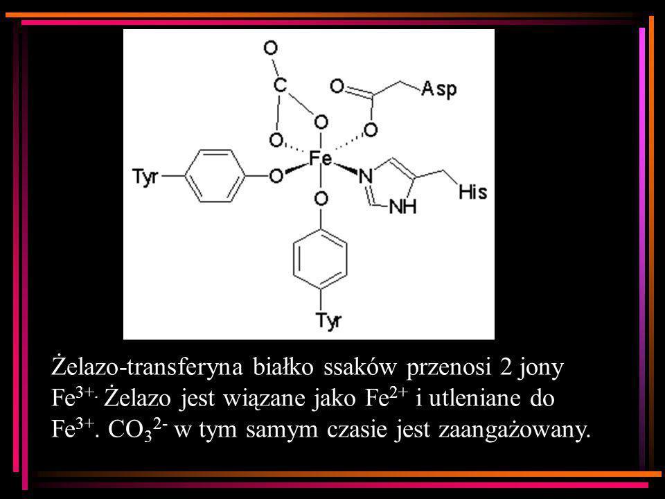 Żelazo-transferyna białko ssaków przenosi 2 jony Fe 3+. Żelazo jest wiązane jako Fe 2+ i utleniane do Fe 3+. CO 3 2- w tym samym czasie jest zaangażow