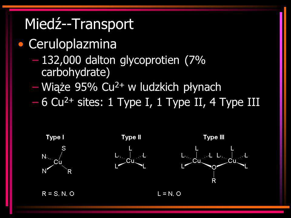 Miedź--Transport Ceruloplazmina –132,000 dalton glycoprotien (7% carbohydrate) –Wiąże 95% Cu 2+ w ludzkich płynach –6 Cu 2+ sites: 1 Type I, 1 Type II