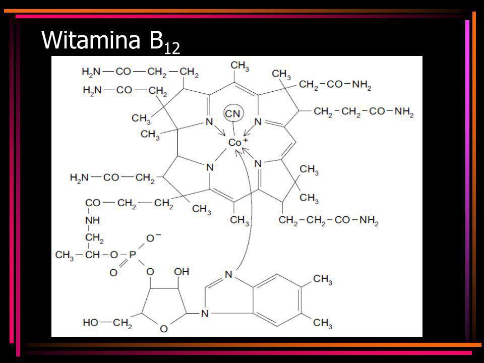 Witamina B 12